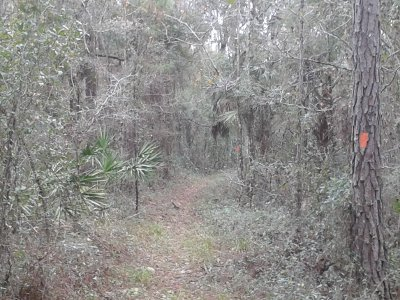 Green Swamp Florida Trail